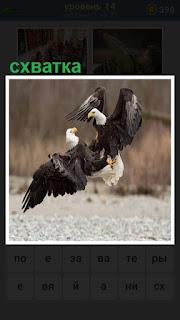 две птицы между собой дерутся, происходит схватка