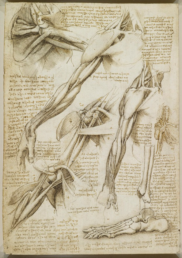 A Rare Glimpse of Leonardo da Vinci's Anatomical Drawings