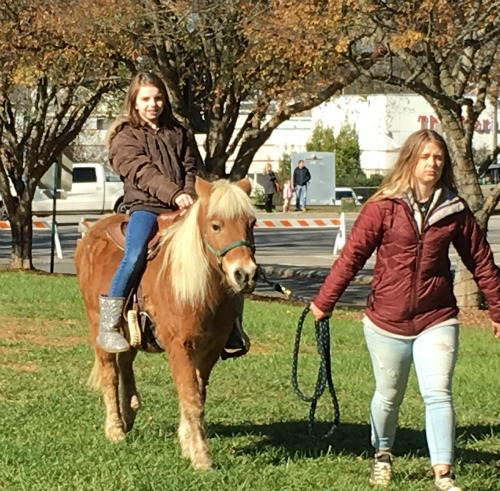 Christmas pony rides