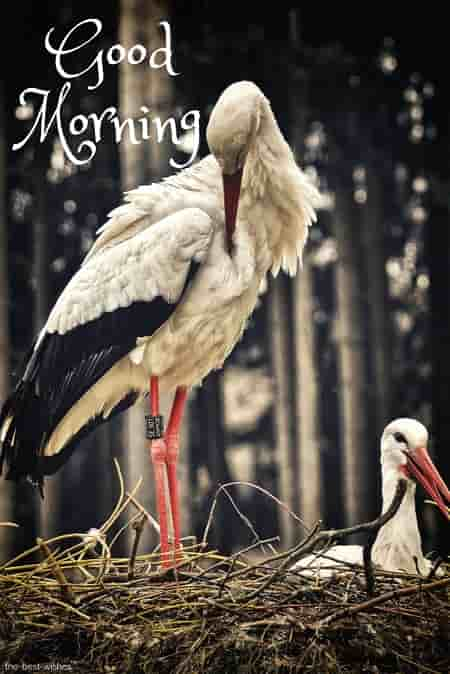 good morning with birds