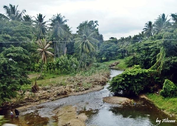 peisaj-Sudul-Indiei