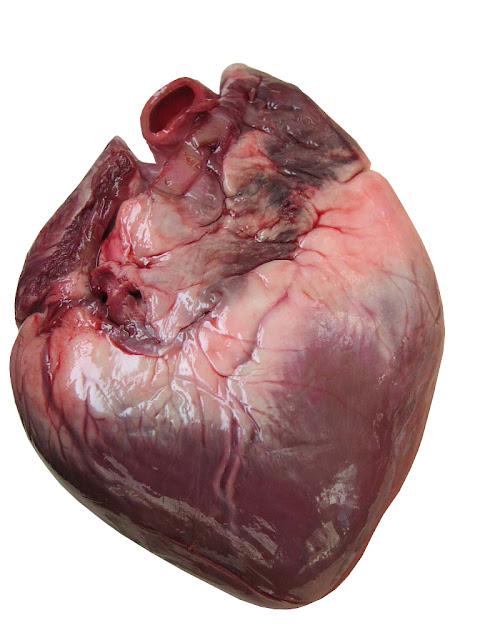 Awal Mula Jantung Koroner pada diri manusia