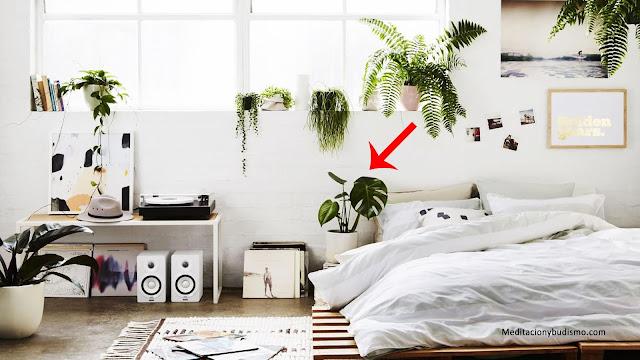 Las plantas protectoras del hogar y cómo tienes que usarlas