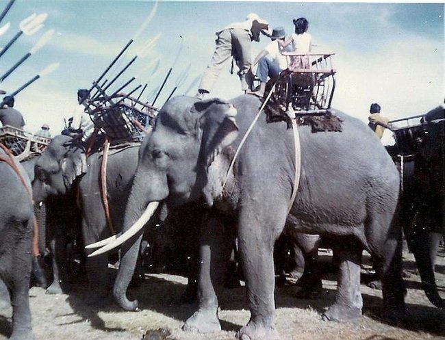 Шоу на слонах Таиланд