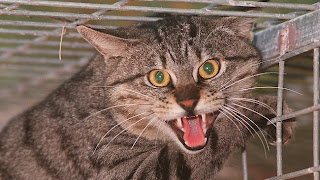 697951-feral-cats.jpg