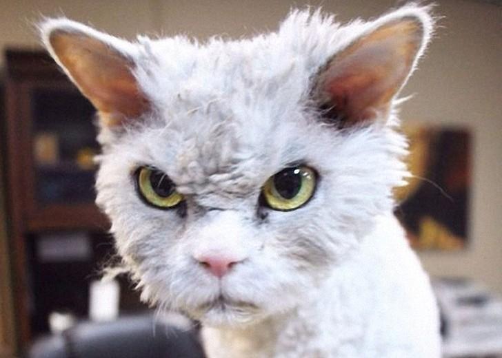 Альберт — самый злой кот интернета