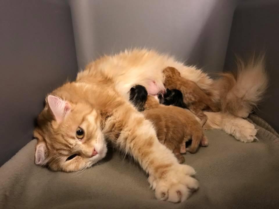 Kucing melahirkan anak