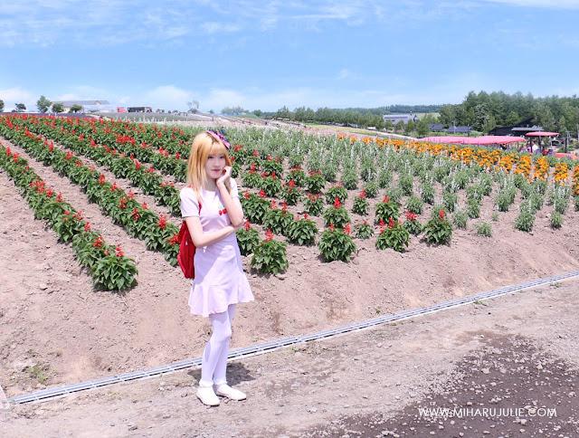 Furano Biei Lavender from Sapporo