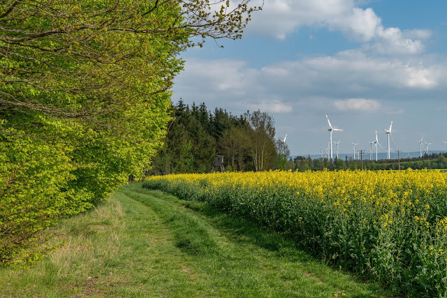 Premiumwanderweg - Traumschleife Burgstadt-Pfad – Kastellaun | Kyrill-Sturmwurferlebnispfad | Wandern-Hunsrück 07