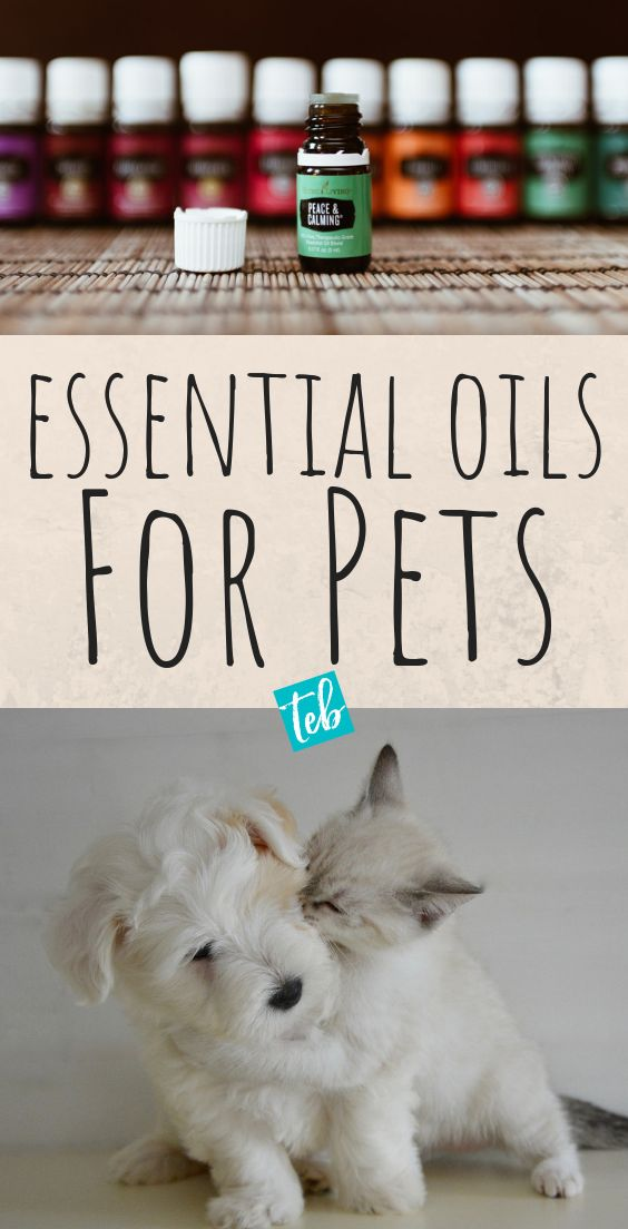 How to Use Essential Oils on Pets (Cats, Dogs, Birds)