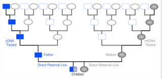 Y-DNA paternal line