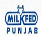 Milkfed Punjab Recruitment