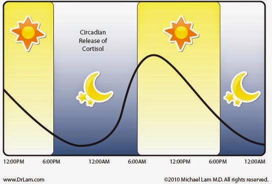 cykl dobowy kortyzolu, poziomy kortyzolu
