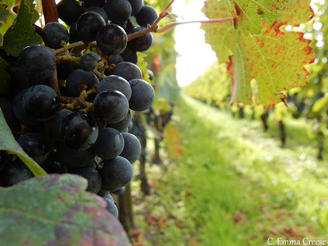 Where to eat and drink in Bordeaux France Adventures of a London Kiwi