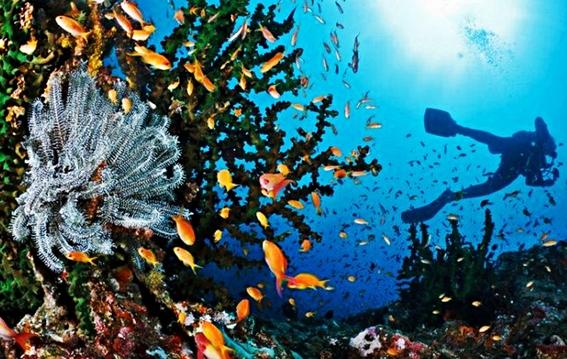 destinasi wisata terbaik 34 provinsi se indonesia bagian
