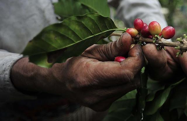 Cafetaleros de Veracruz rechazan planta de Nestlé