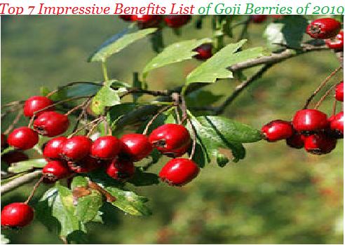 Top 7 Impressive Benefits List of Goji Berries