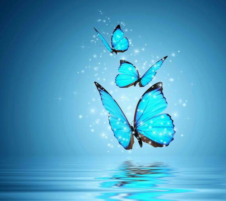 GINITEANDO: De Libro de las mariposas de Arnaldo Calveyra.