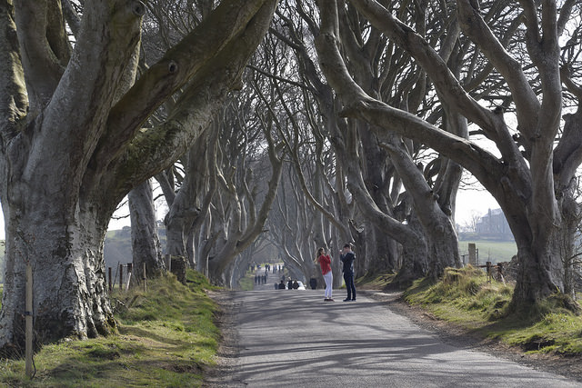 Juego de Tronos The dark hedges