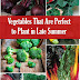 Vegetables To Plant In Late Summer