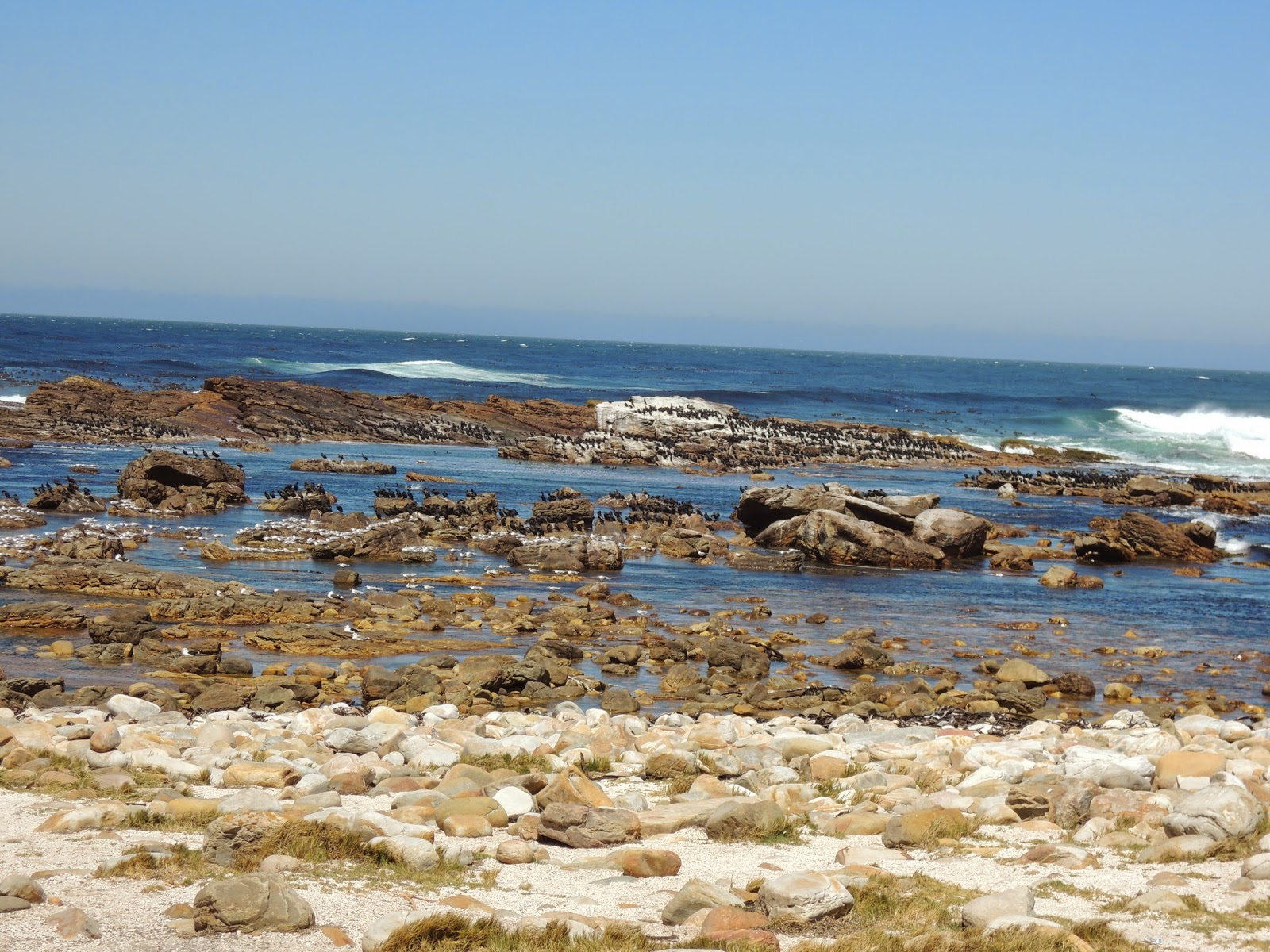 cape of good hope southern tip of the african continent lots of birds