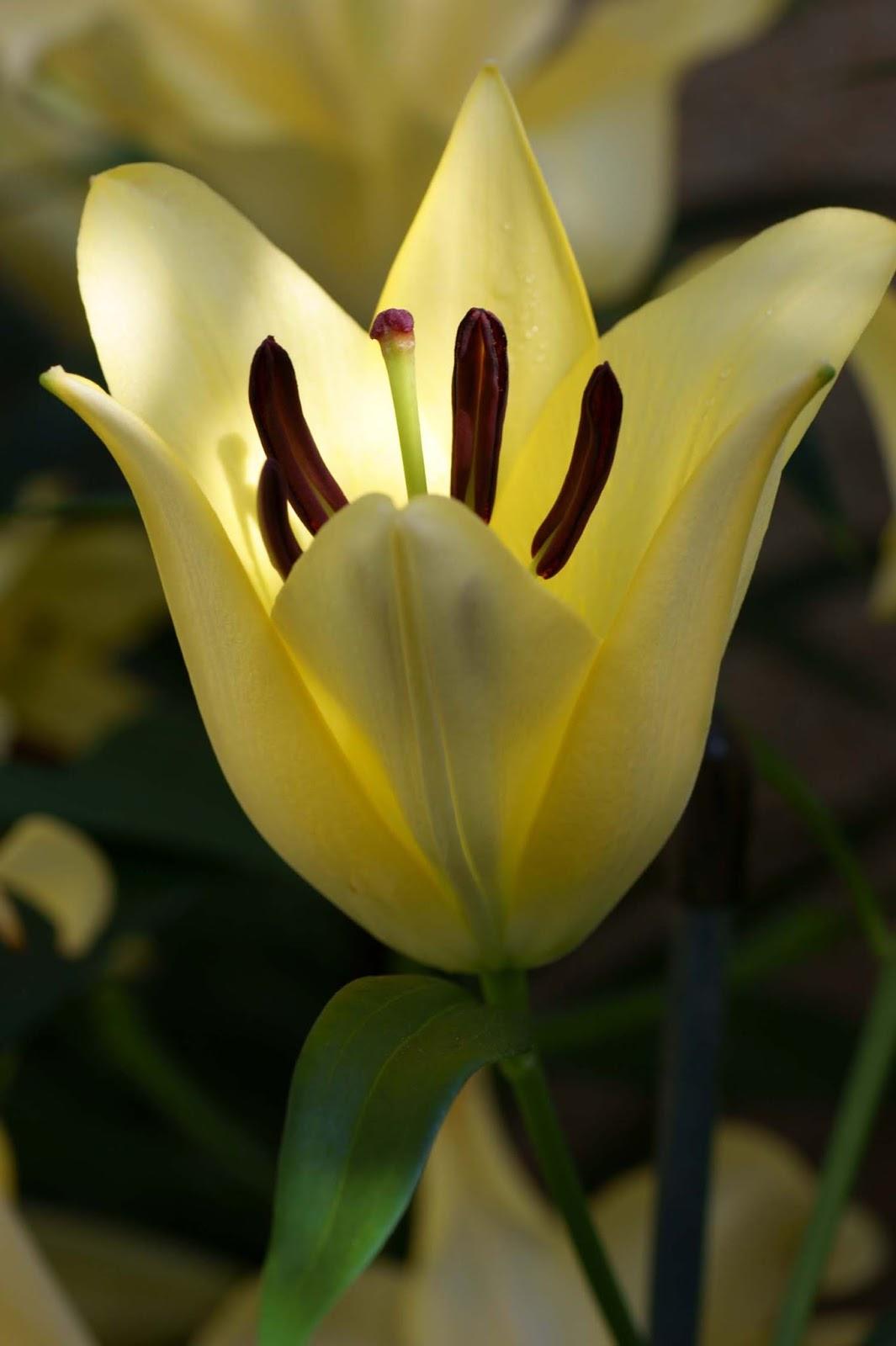 Home And Garden Easter Ideas