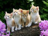 Keunikan Kucing yg Jarang Diketahui