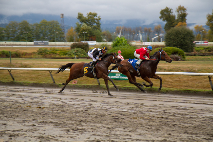Horses racing at Hastings Racetrack