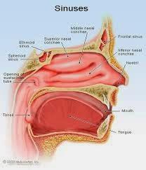 Obat Penyakit Sinusitis