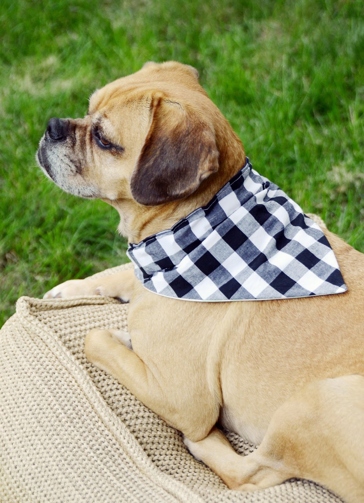 Easy Diy Reversible Dog Bandana Sewing Pattern Design
