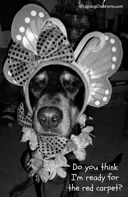 doberman mix rescue dog dressed up