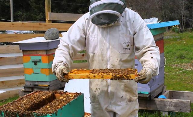 Σε ποιες περιοχές χτύπησε η σμηνουργία μέχρι στιγμής: Πως θα πάει από μέλι η χρονιά;