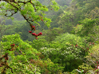 flowering trees in Puriscal, Costa Rica