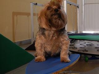 como fazer exercícios com cães