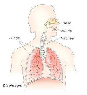 Speech mechanism,Air stream mechanism diagram, Respiratory system, Articulatory system,phonatory system