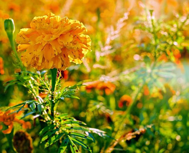 cua hang hoa tuoi quan 4