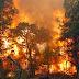 BLH Tegaskan Masalah Kebakaran Hutan Tanggungjawab Dishut