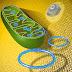 Un estudio revela que el ADN mitocondrial puede pasar de padres a hijos