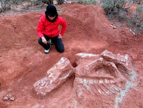 Απολίθωμα γιγαντιαίου φυτοφάγου δεινοσαύρου βρέθηκε στην Αργεντινή