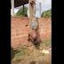 População revoltada espanca e pendura bandido de cabeça para baixo, assista o vídeo