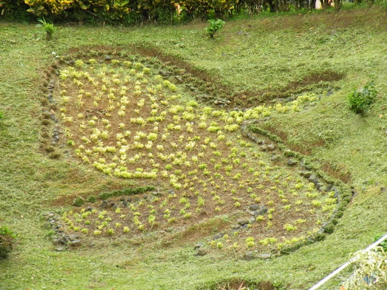 Du four au jardin et mes dix doigts fonds saint denis - Petit jardin newfoundland saint denis ...