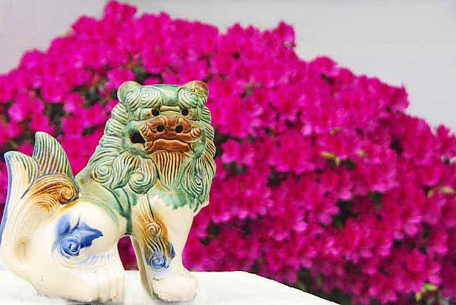 lion dog, statue, azalea, flowers
