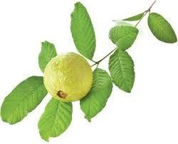 Guava leaves best home remedies for hair fall