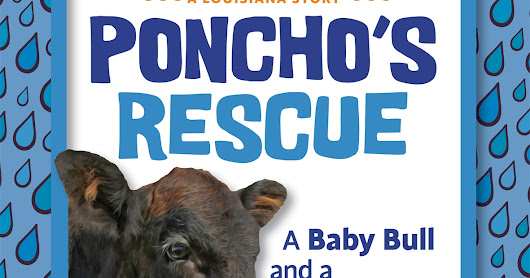 A baby bull and a big flood make up 'Poncho's Rescue'