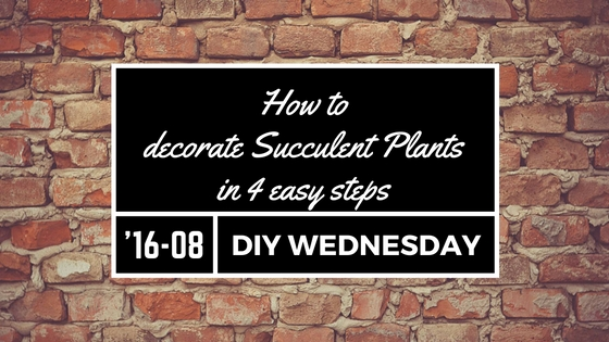 How to decorate succulent plants in 4 steps