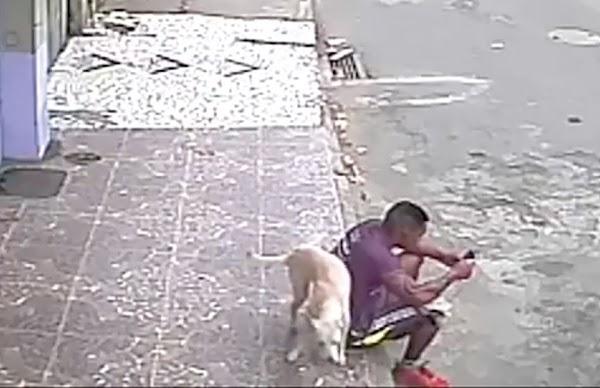 Perro callejero le hace tremenda travesura, y de castigo... lo adopta