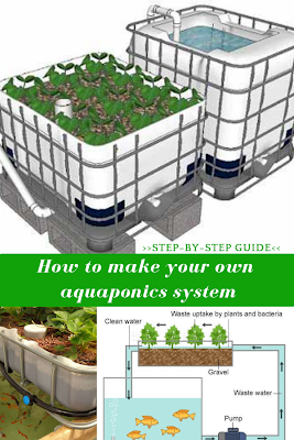 Aquaponics' principles are simple: you grow fish in a tank, proliferate the plant seeds, care for them during their development period and in less than one year harvest your own crops.