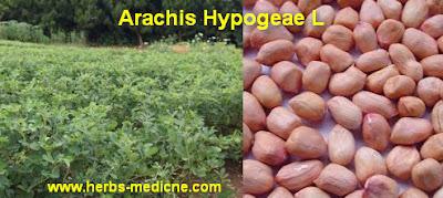 Herbal Medicine use Peanuts