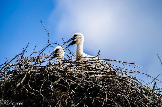 В-гнездото-In-the-nest