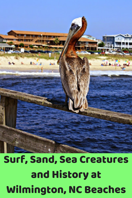 Surf, Sand, Sea Creatures and History at Wilmington, North Carolina Beaches